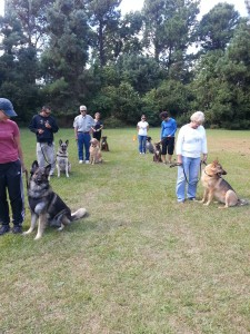 Group Dog Training Lessions